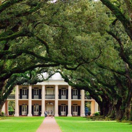 Oak Alley Plantation, tree, botany, plant, estate,