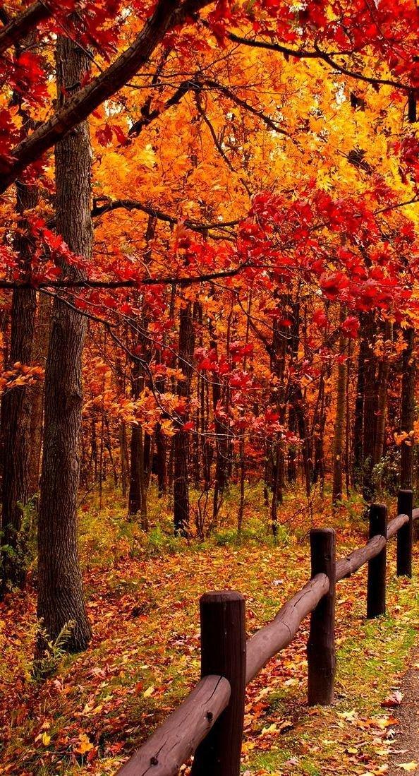 nature, autumn, woodland, tree, deciduous,