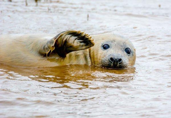 mammal, vertebrate, harbor seal, polar bear, seals,