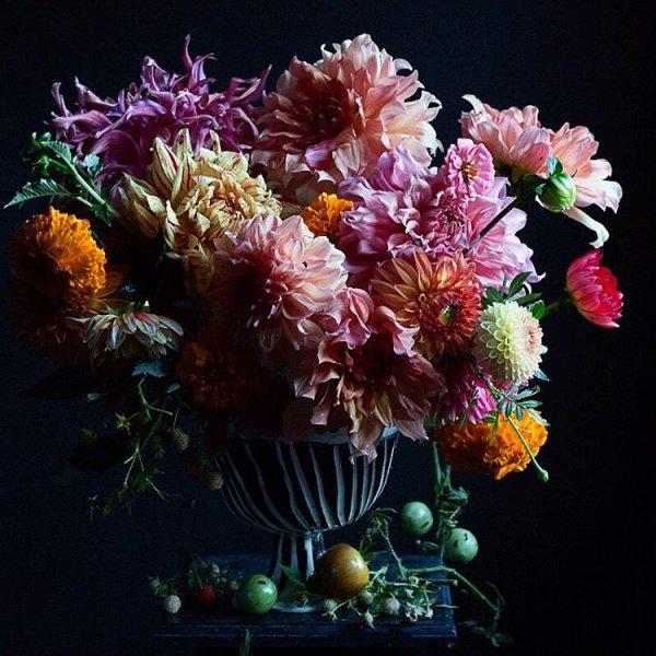flower, painting, still life, plant, chrysanths,