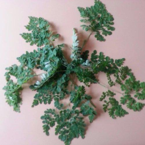 plant, tree, leaf, herb, land plant,