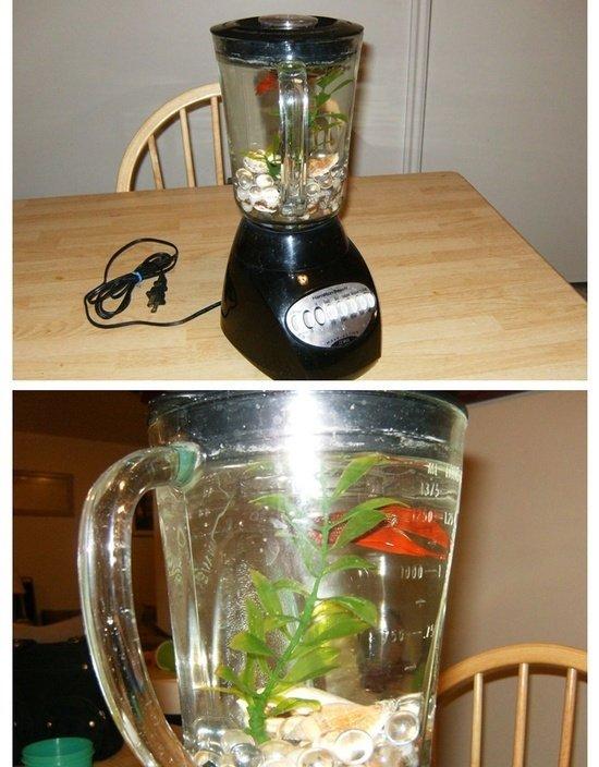 Non-Functioning Blender Beta Fish Tank