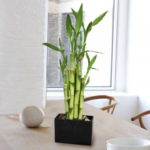 plant, flower arranging, floristry, produce, bamboo,