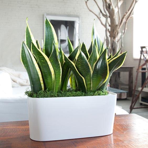 green, plant, flower, floristry, land plant,