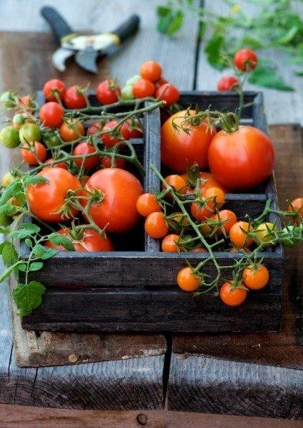 Terror Tomatoes