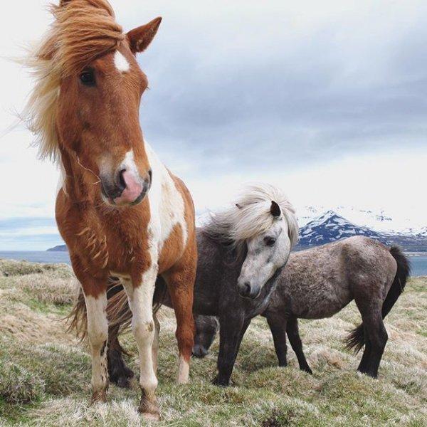 horse, mammal, animal, mare, vertebrate,