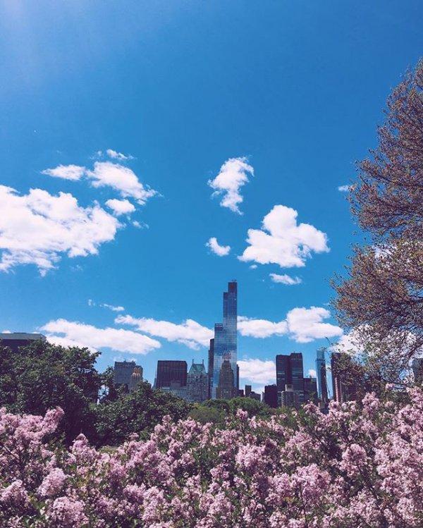 Central Park, flower, sky, plant, tree,