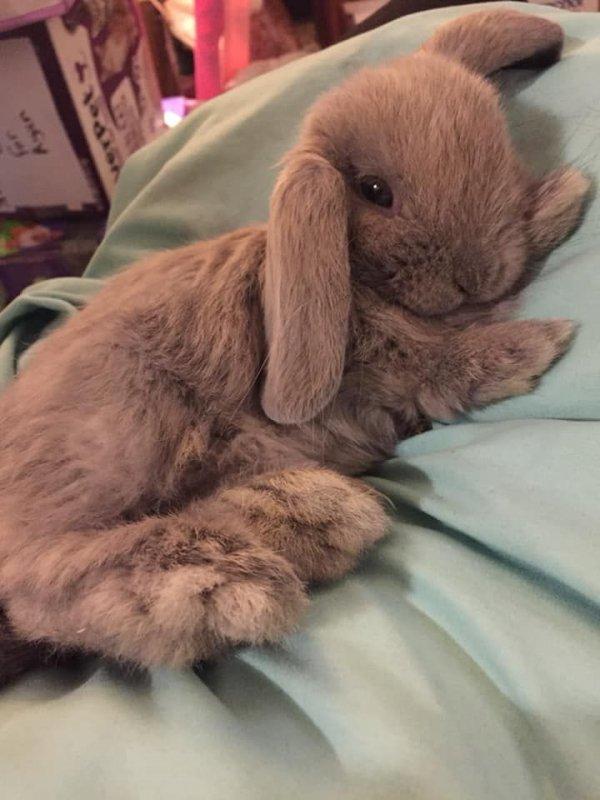 Domestic rabbit, Rabbit, Rabbits and Hares, Skin, Ear,
