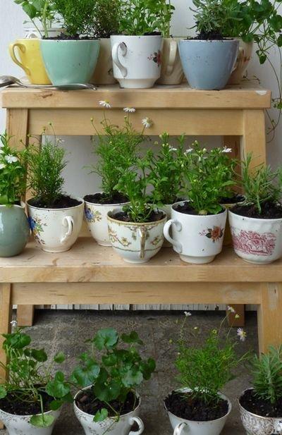 garden,plant,yard,backyard,flower,