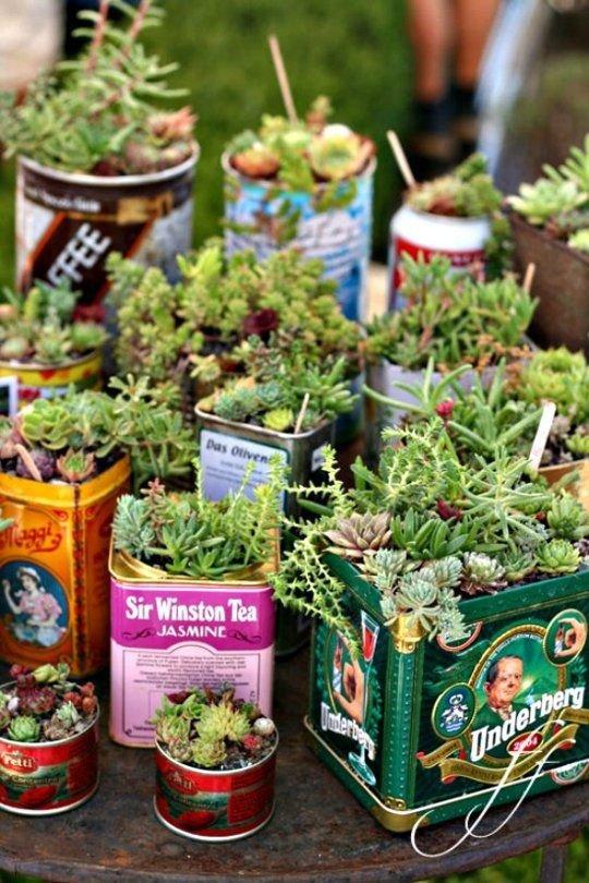 plant,floristry,flower,herb,produce,