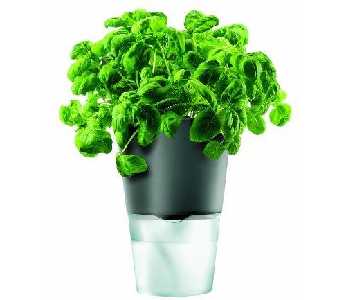 green, plant, land plant, leaf, flower,