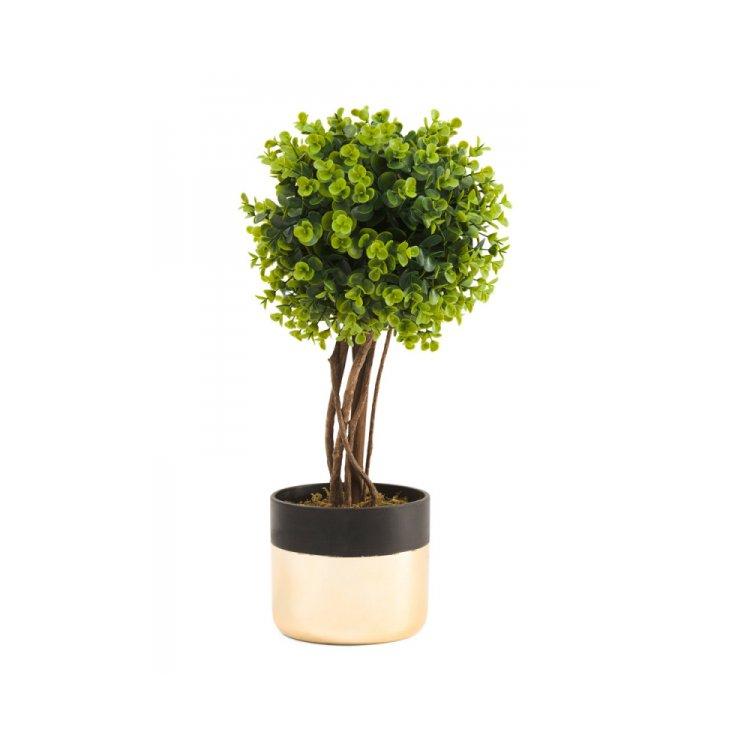 plant, tree, land plant, woody plant, flower,