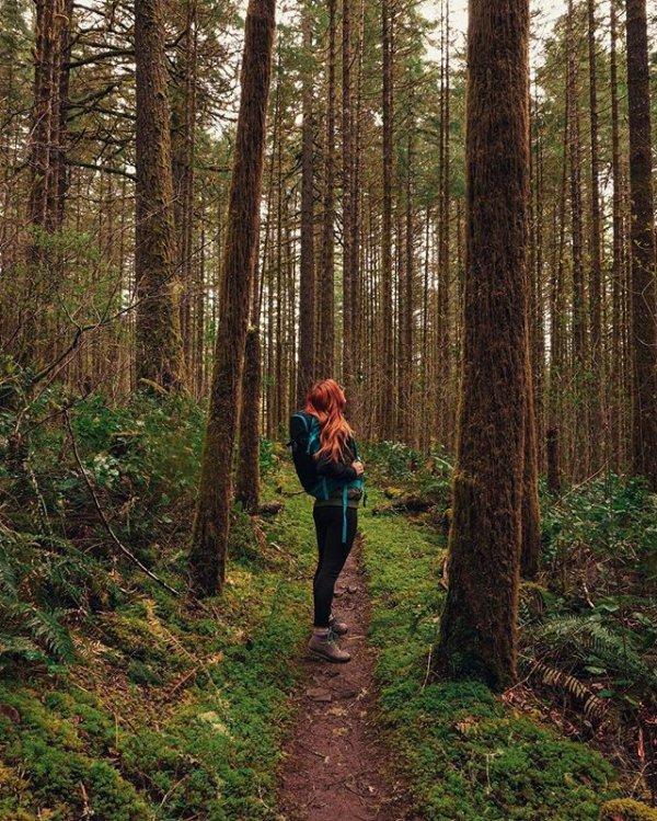 habitat, tree, woodland, wilderness, forest,