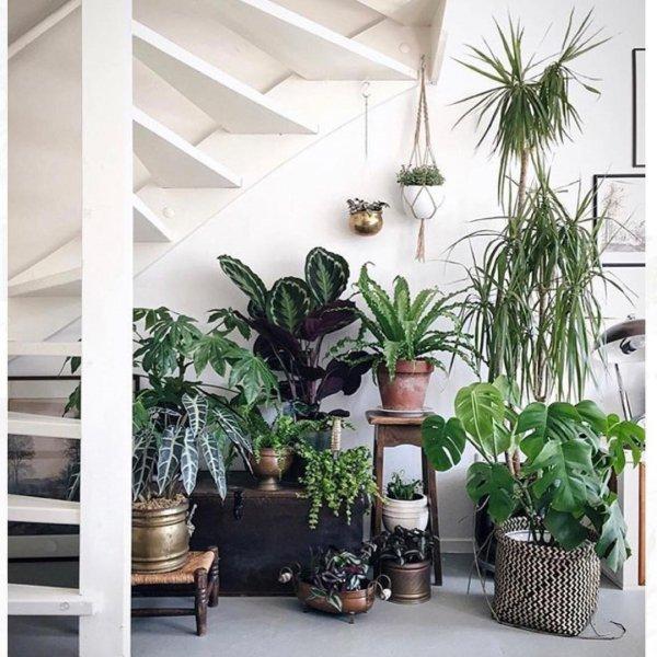 plant, flowerpot, houseplant, living room, interior design,