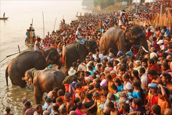 Attend the Sonepur Cattle Fair