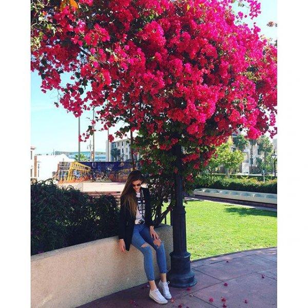 plant, flower, flowering plant, produce, tree,