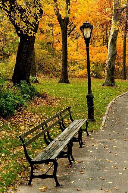 leaf, tree, autumn, plant, grass,