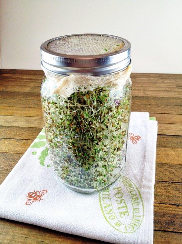 Alfalfa Sprouts Are a Danger Zone