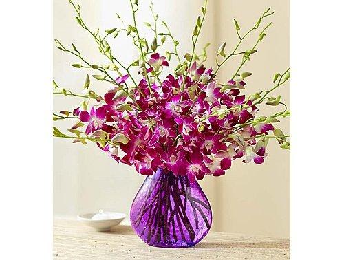 flower arranging,flower,cut flowers,plant,violet,