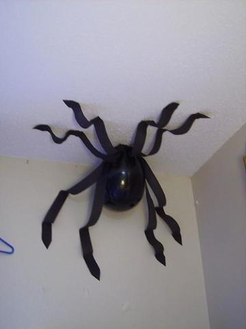 spider,arachnid,invertebrate,arthropod,