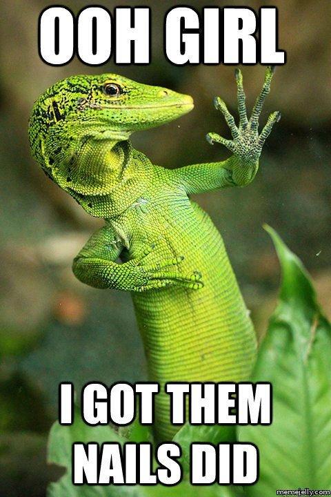Fancy Feast,reptile,vertebrate,scaled reptile,fauna,