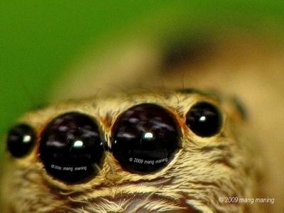 Eek, a Spider
