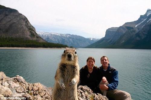 Famous Squirrel