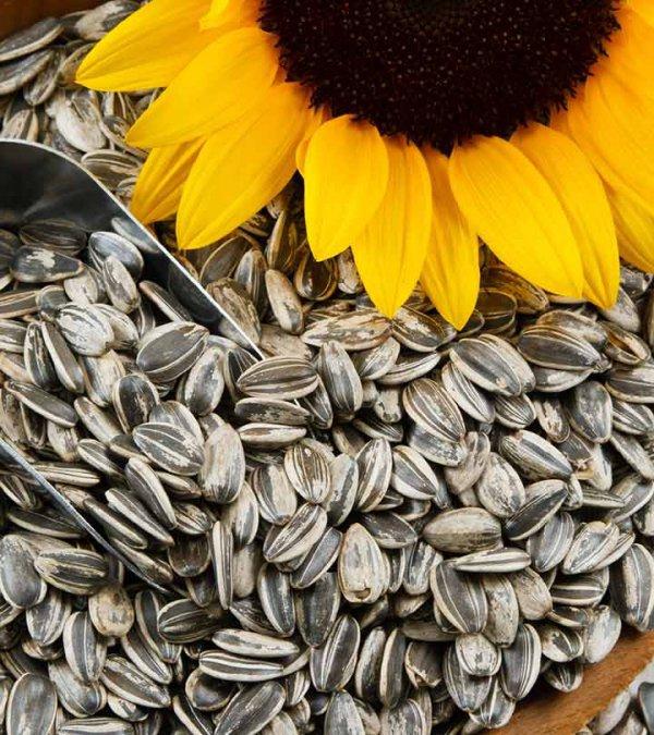 vegetarian food, sunflower seed, food, produce, seed,