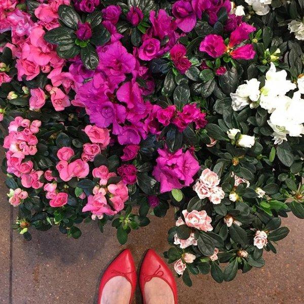 flower, plant, land plant, flowering plant, woody plant,