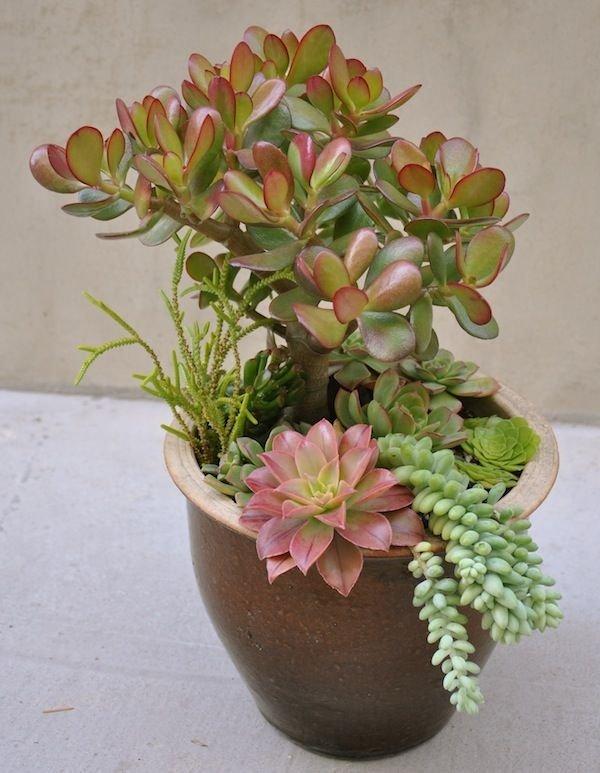 flower arranging,plant,flower,flora,floristry,