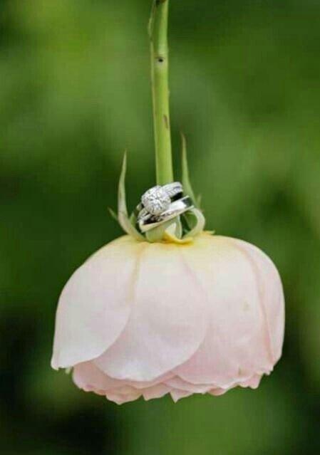 flower,flora,plant,insect,land plant,