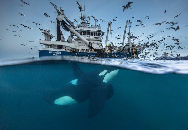 ocean, marine mammal, sea,