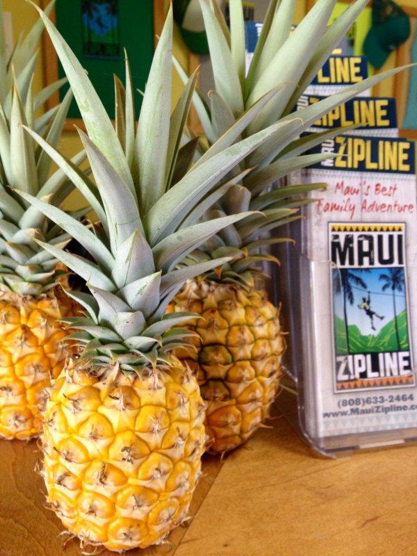 Visit a Pineapple Plantation in Maui, Hawaii, USA