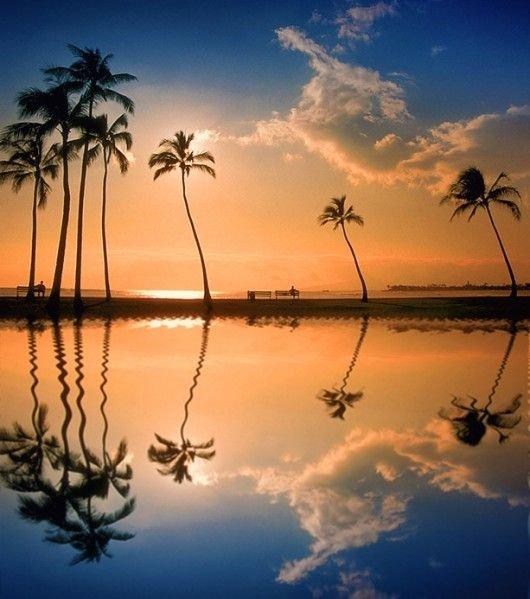 sky,nature,atmospheric phenomenon,tree,sunrise,