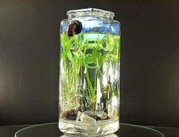 bottle,vase,glass bottle,glass,lighting,
