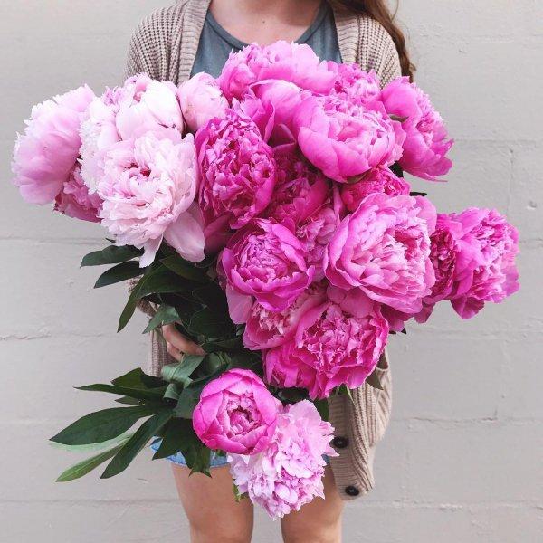 flower, pink, flowering plant, flower bouquet, plant,