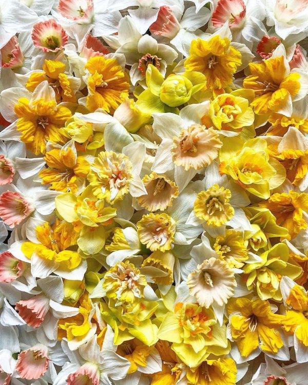 flower, yellow, flowering plant, cut flowers, floristry,