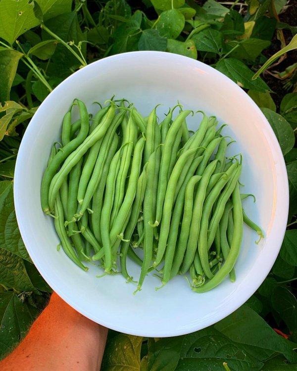 vegetable, green bean, produce, vegetarian food, lima bean,