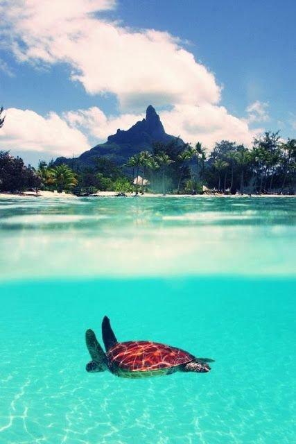 sea, coastal and oceanic landforms, sea turtle, caribbean, vacation,