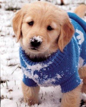 dog,mammal,dog breed,vertebrate,nose,