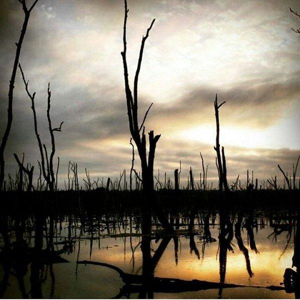 sky, tree, reflection, water, wetland,