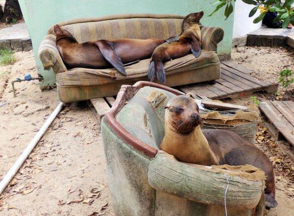 mammal, street dog, zoo, 047,