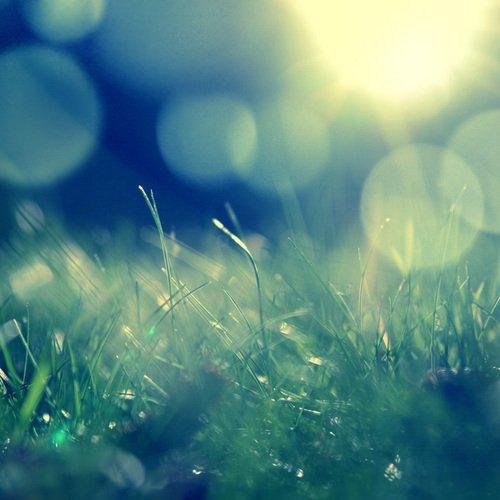 Cut Grass = Summertime