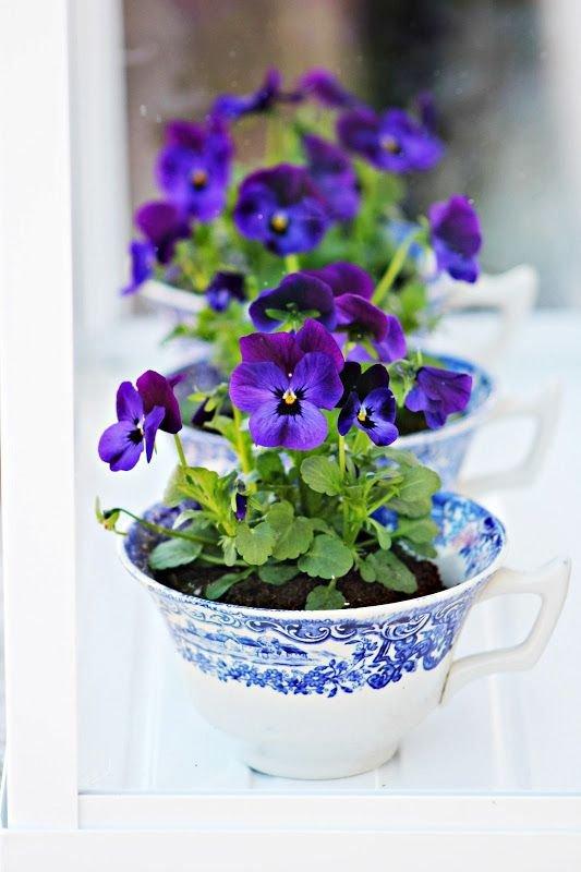 flower,blue,violet,plant,purple,