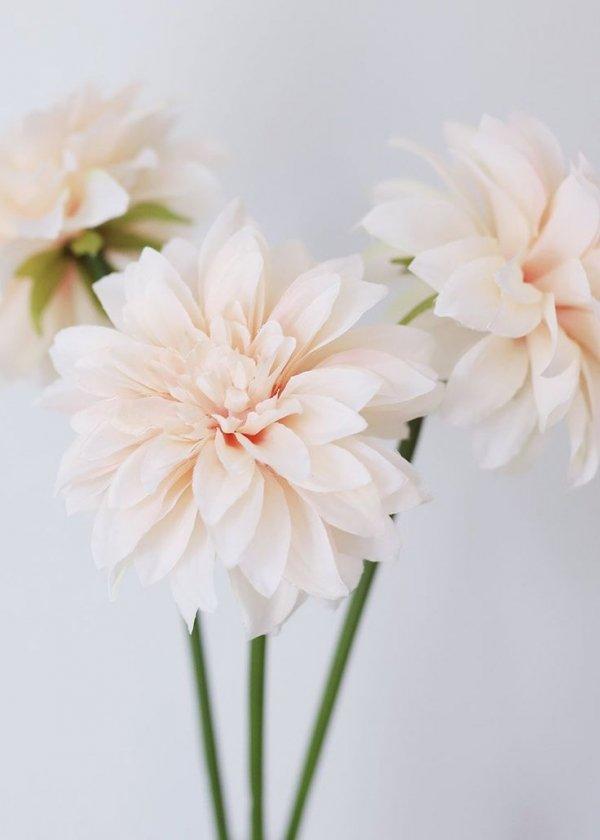 Flower, Petal, Cut flowers, Pink, Plant,