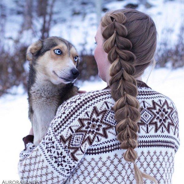 pet, mammal, dog, animal, dog breed,