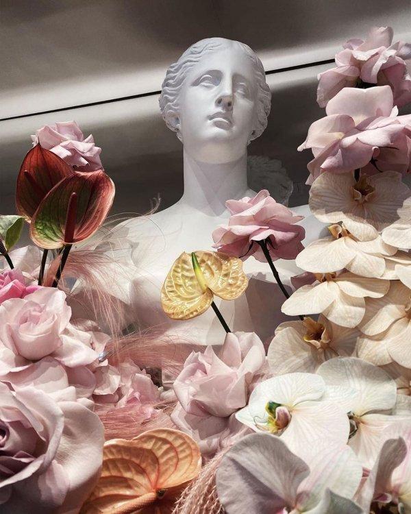 Pink, Petal, Flower, Cut flowers, Plant,