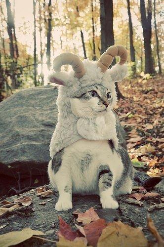 Goat-cat