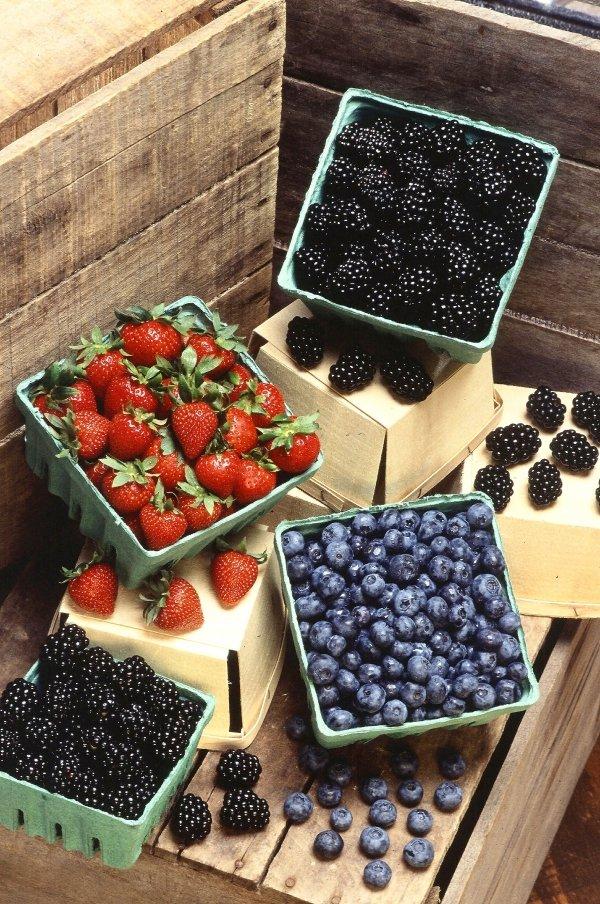 Berries and Bacteria