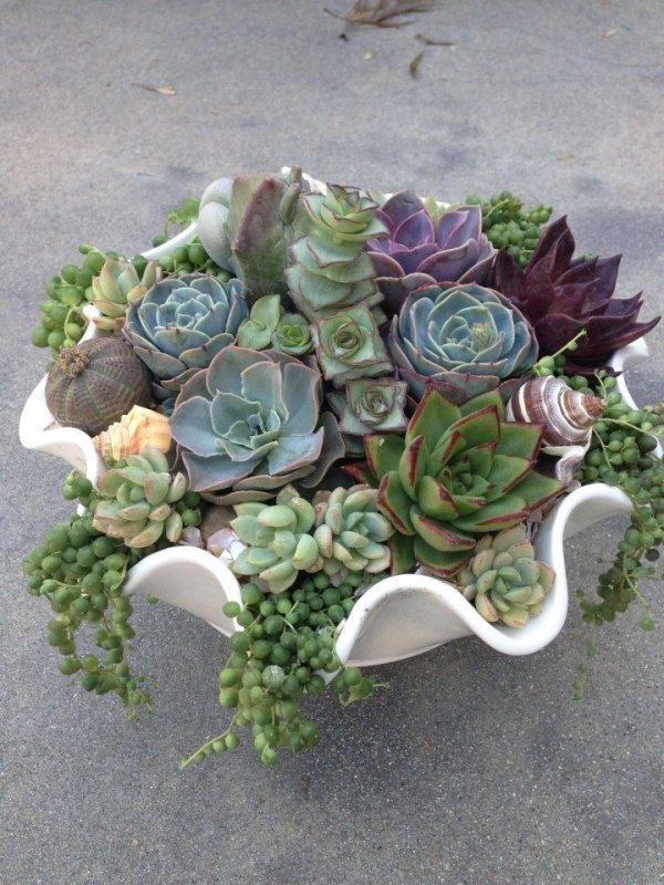 flower arranging,flower,green,plant,floristry,